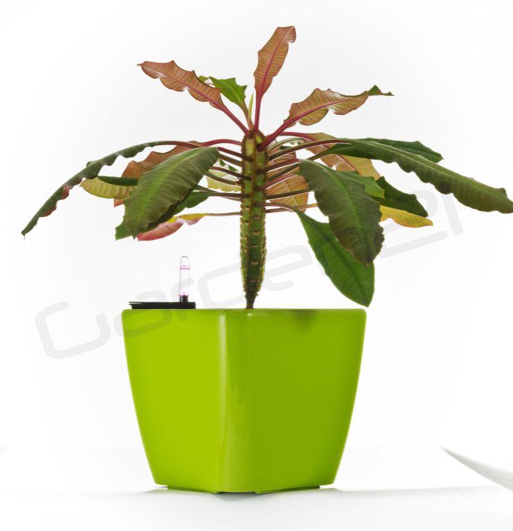 Samozavlažovací kvetináč G21 Cube zelený 22cm